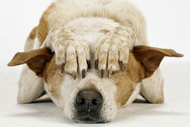 Ejercicios para acabar con el miedo de los perros a los fuegos artificiales