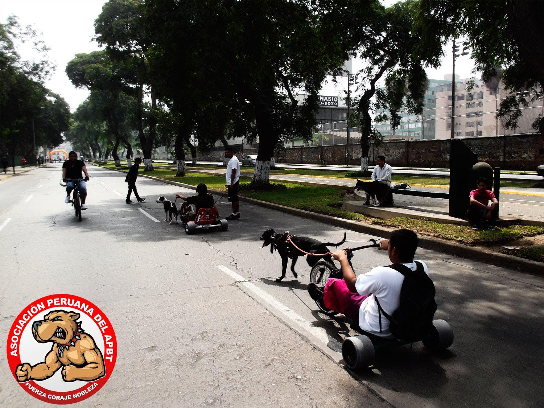 Apbt Peru + Drift Trike Mania 21 Abril 2013