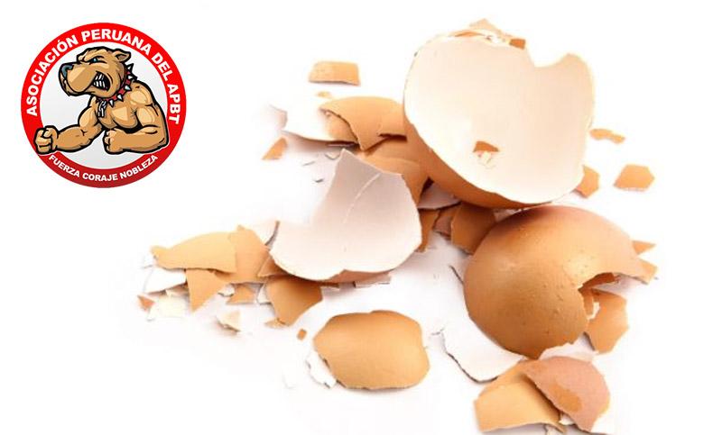 apbtperu-huevo-cascara