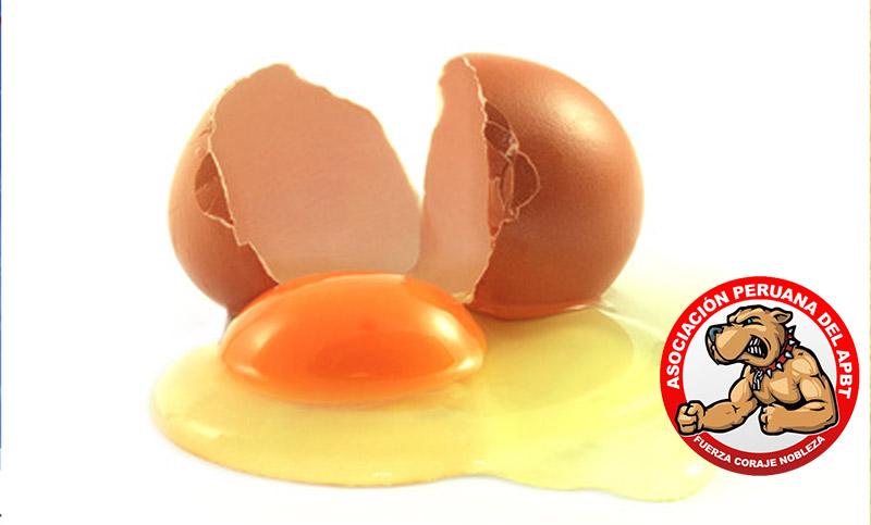 Es malo que un perro coma huevos crudos ?