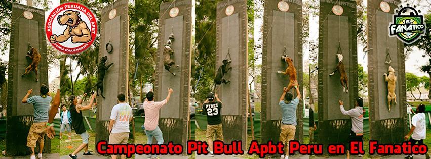 Campeonato Pit Bull – Apbt Peru en El Fanatico 14 de Febrero 2015