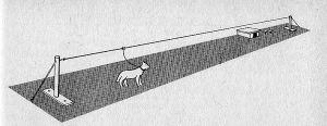 Método de sujección de perros alrededor del muro de Berlín.