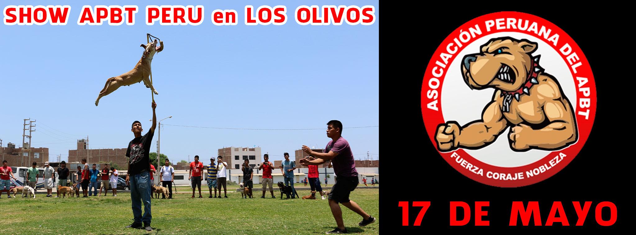 SHOW APBT PERU en LOS OLIVOS – 17 de Mayo