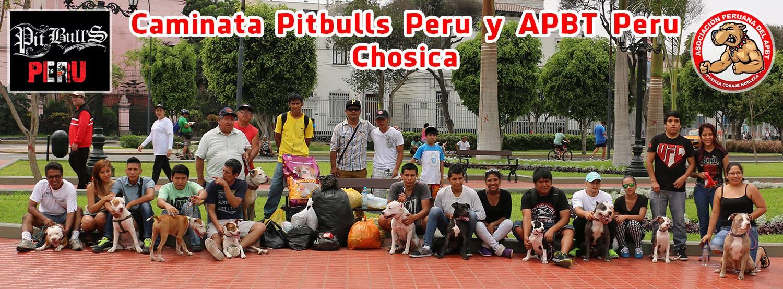 Caminata Pitbulls Peru y APBT Peru (pitbuleros en accion apoyando a los canes damnificados de Chosica)