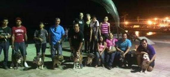 México El Pitbull no es como lo pintan