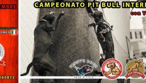 campeonato-pit-bull-internacional