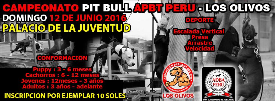 Campeonato Pit Bull Apbt Peru – Los Olivos / 12 de Junio 2016