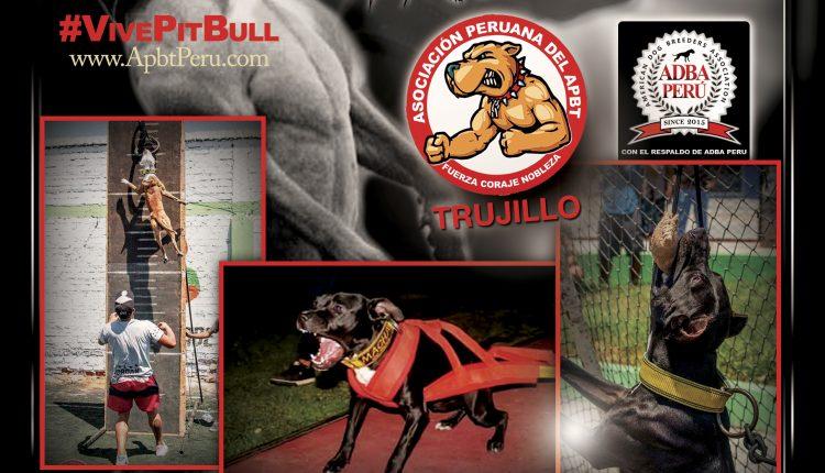 1er Campeonato Pit Bull Apbt Peru – Trujillo
