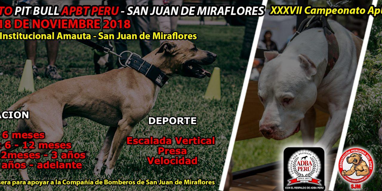 Campeonato Pit Bull Apbt Peru San Juan de Miraflores – XXXVII CAMPEONATO APBT PERU
